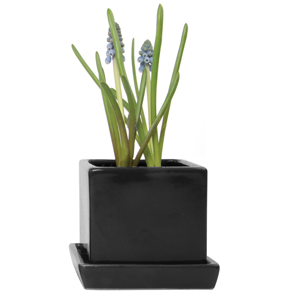 Chive, Cube and Saucer - Black Ceramic Planter with saucer