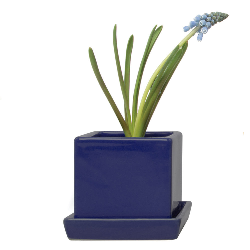 Chive, Cube and Saucer - Cobalt traditional colourful flower pot