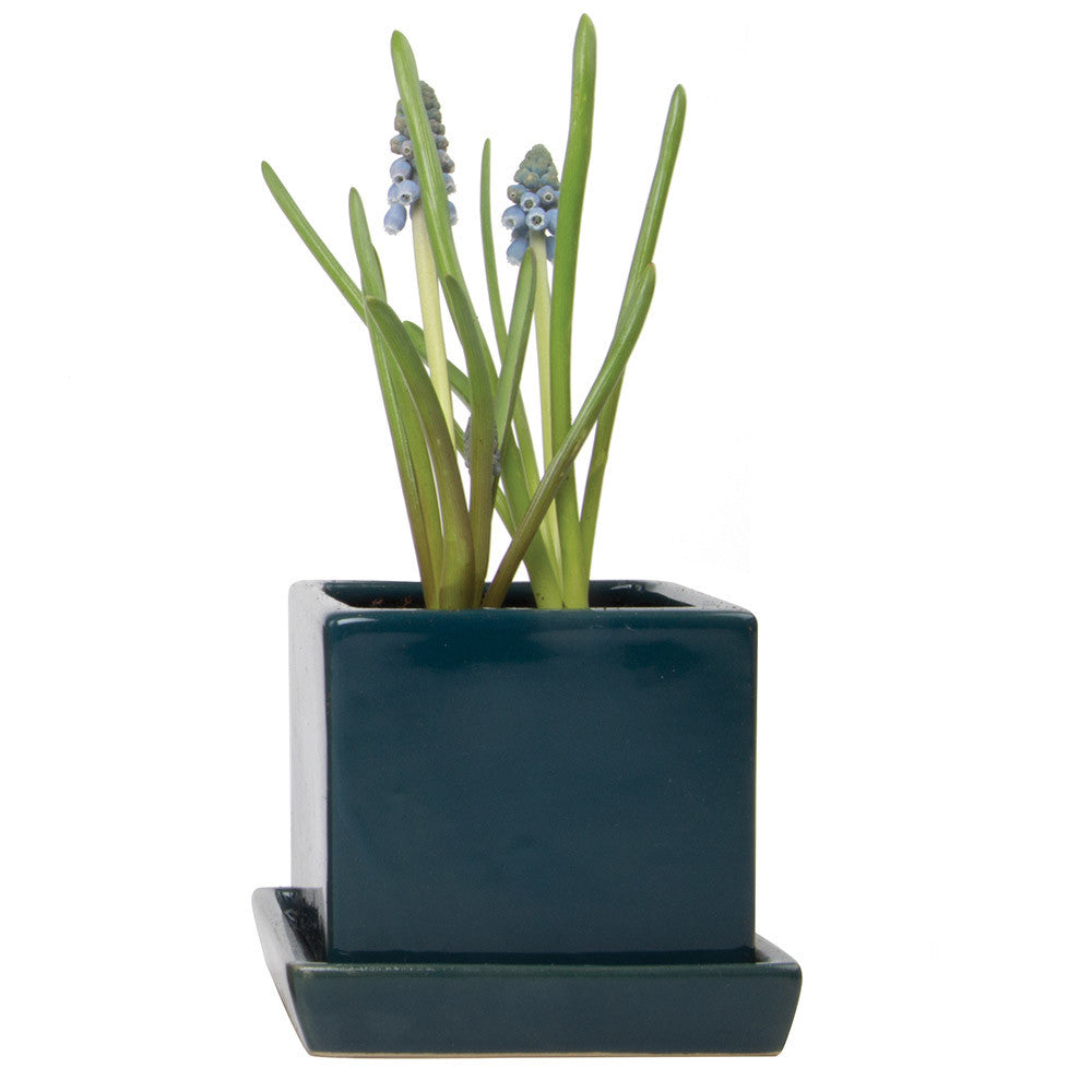 Chive, Cube and Saucer - Green Blue Ceramic Planter with saucer