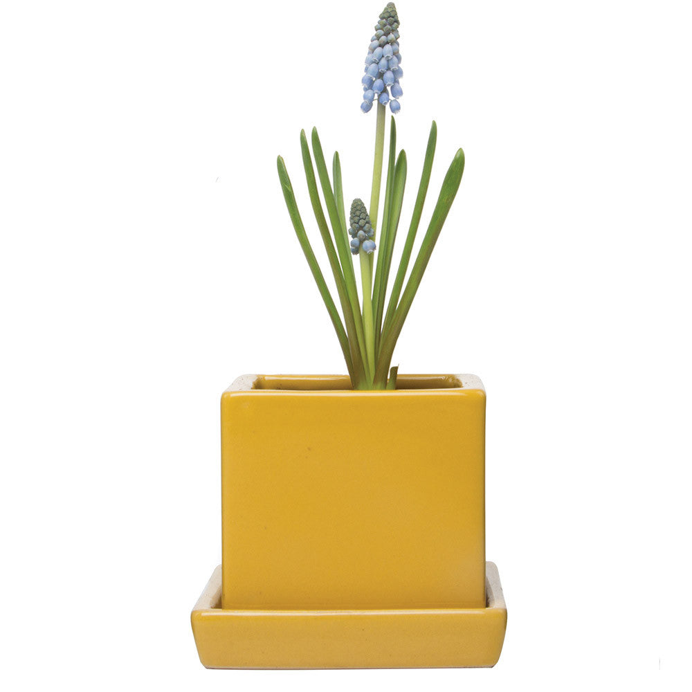 Chive, Cube and Saucer - Goldenrod Ceramic Planter with saucer