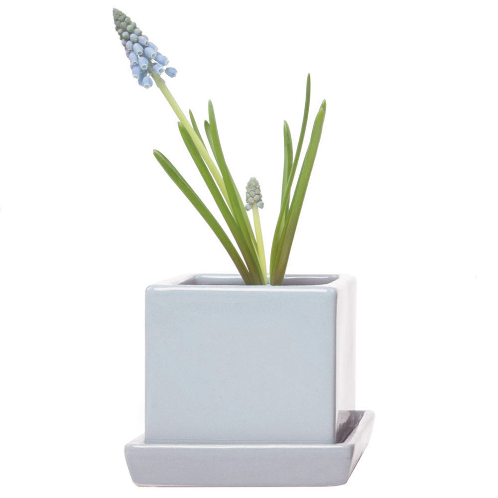 Chive, Cube and Saucer - Ice Blue traditional colourful flower pot