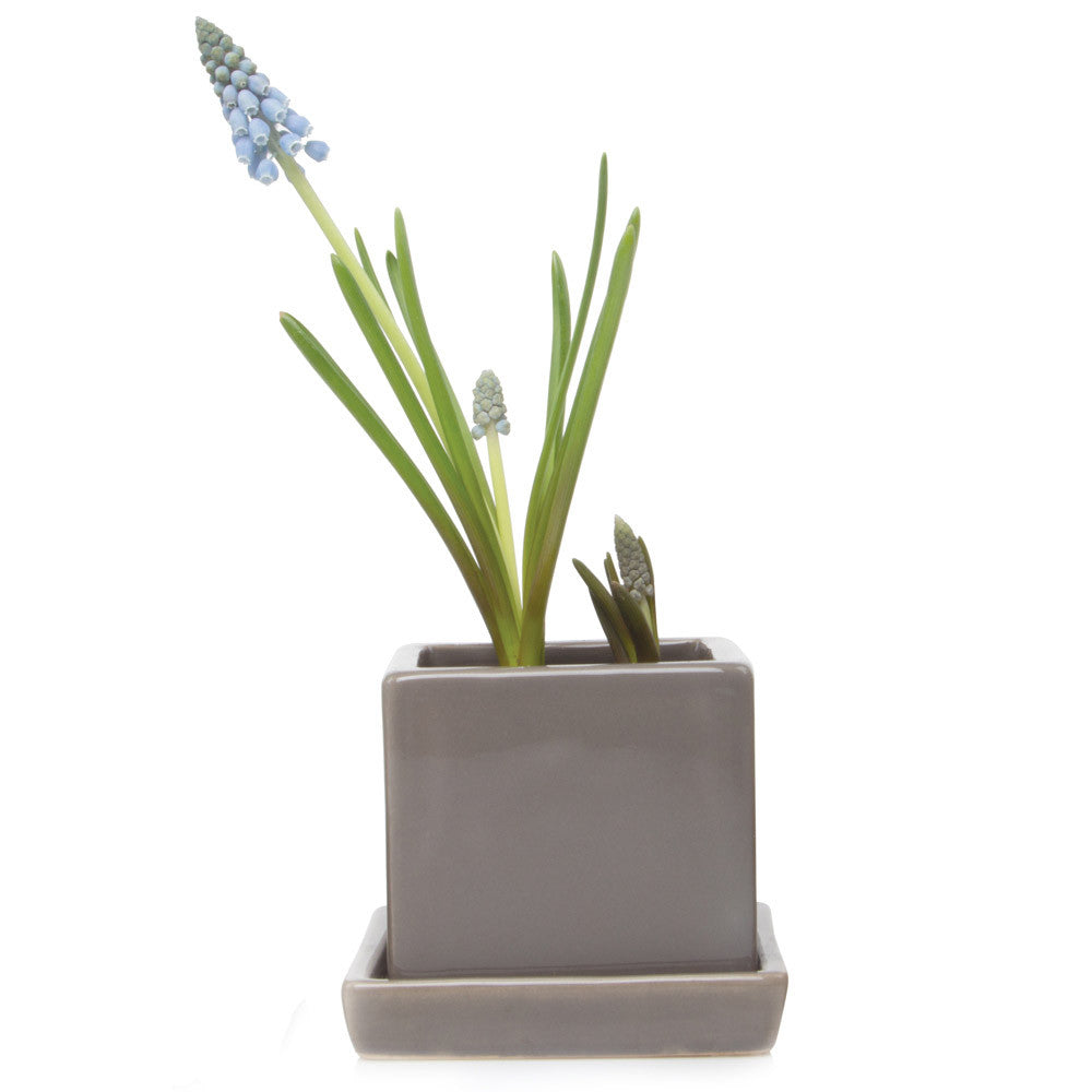 Chive, Cube and Saucer - Medium Grey traditional colourful flower pot