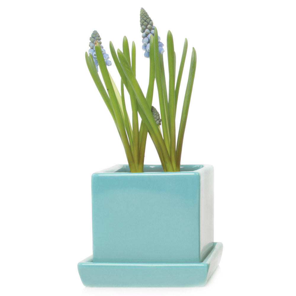 Chive, Cube and Saucer - Mint traditional colourful flower pot