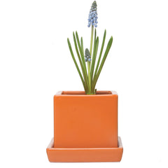 Chive, Cube and Saucer - Orange Ceramic Planter with Saucer
