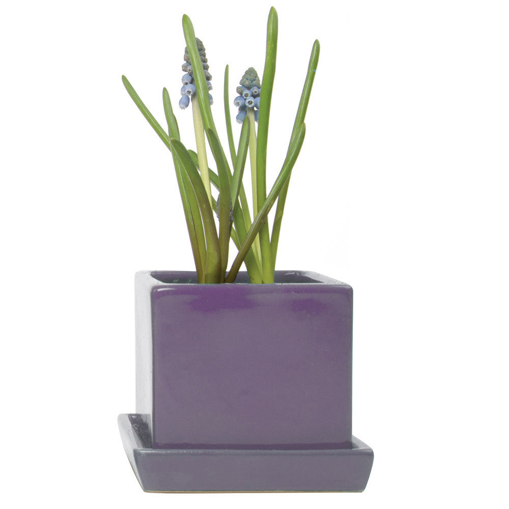 Chive, Cube and Saucer - Purple traditional colourful flower pot