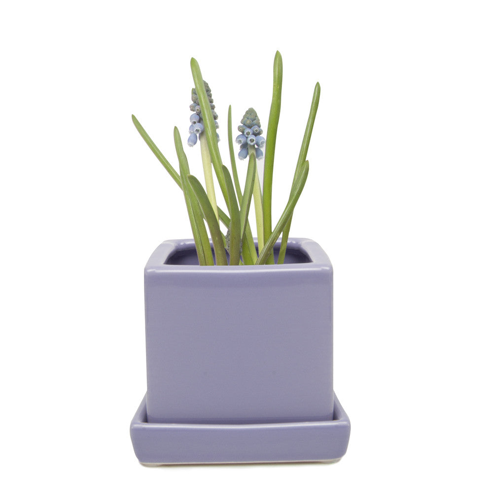 Chive Cube and Saucer - Periwinkle, Cube Ceramic Pot and Saucer