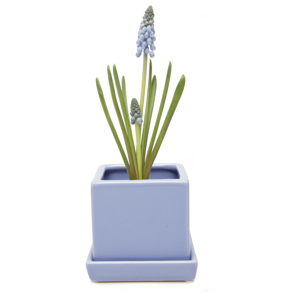 Chive Cube and Saucer - Serenity Blue, Cube Ceramic Pot and Saucer
