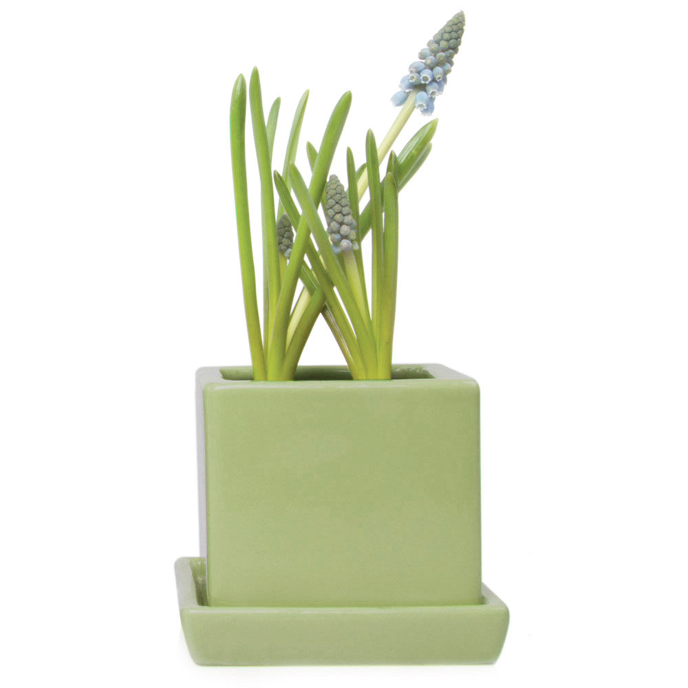 Chive, Cube and Saucer - Fern traditional colourful flower pot