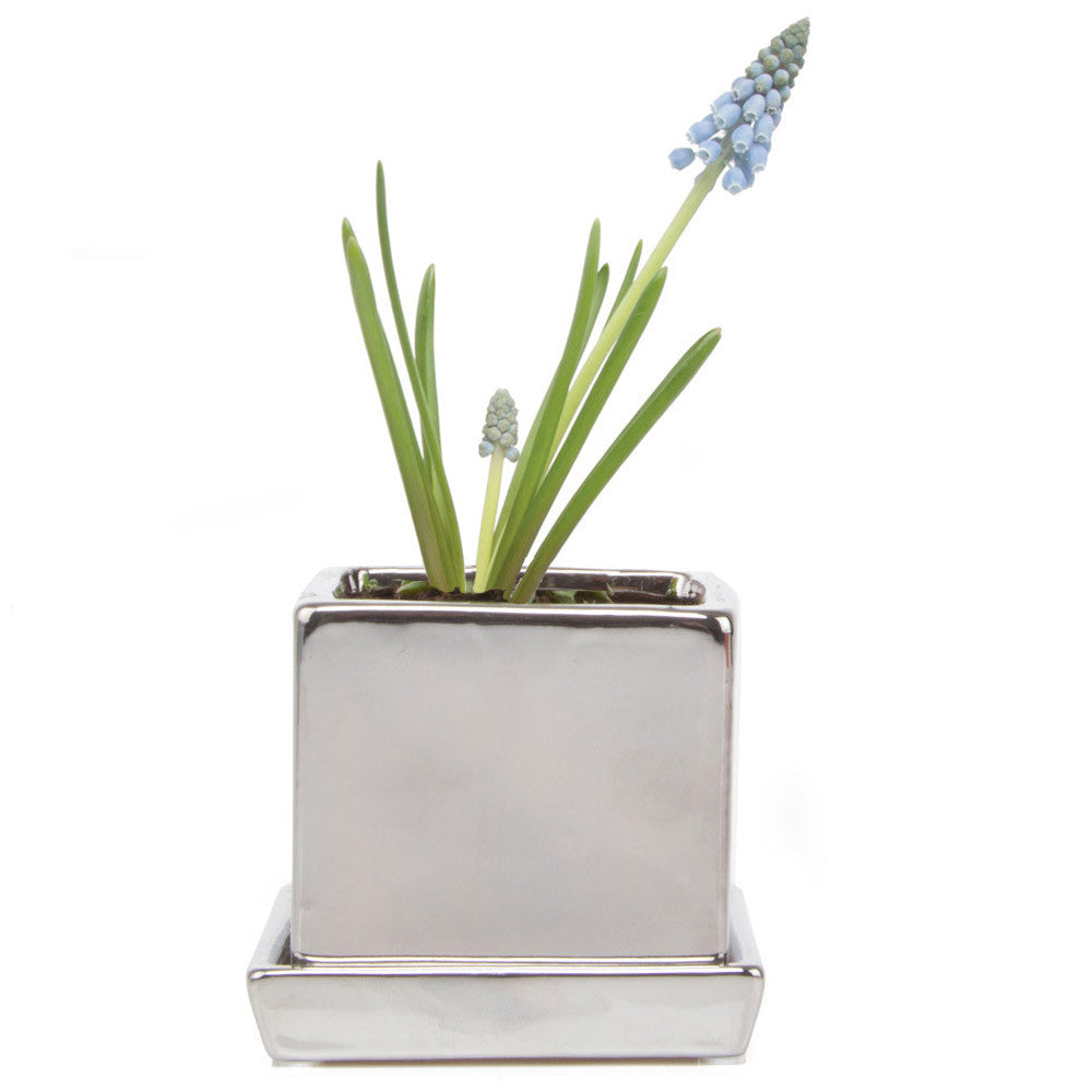 Chive, Cube and Saucer - Silver traditional colourful flower pot