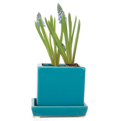 Chive, Cube and Saucer - Teal traditional colourful flower pot