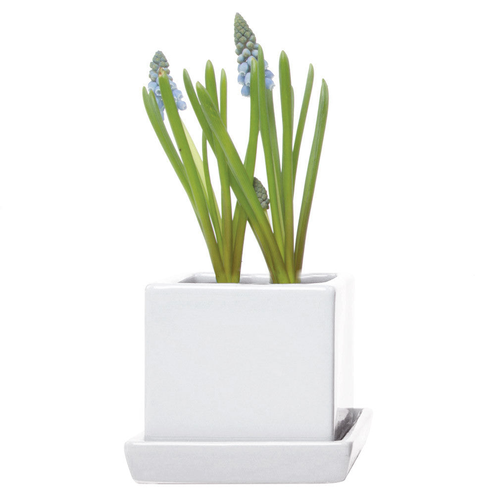 Chive, Cube and Saucer - White traditional colourful flower pot