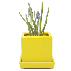 Chive Cube and Saucer - Yellow, Cube Ceramic Pot and Saucer