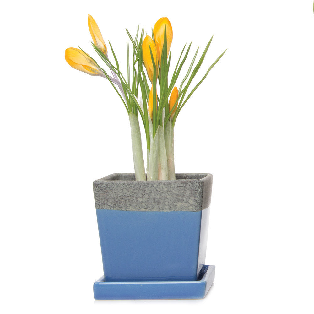 Chive, Duo - Cornflower Ceramic modern flower pot with saucer