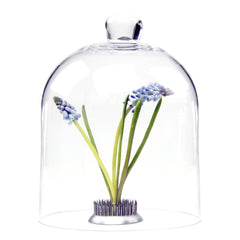 Chive, Gip - Cloche Medium traditional Glass encloser