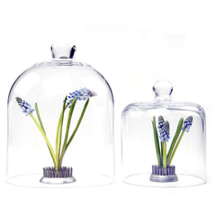 Chive, Gip - Cloche Small traditional Glass encloser