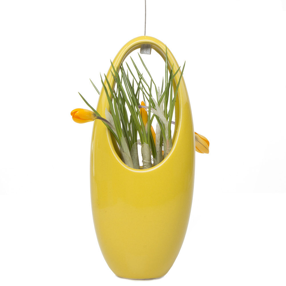 Chive, Hanging Aerium - Egg Yellow, ceramic hanging oval planter