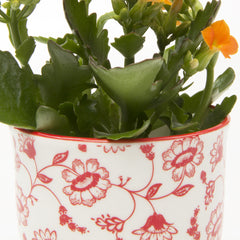 Liberte Pot and Saucer - Red Daisy