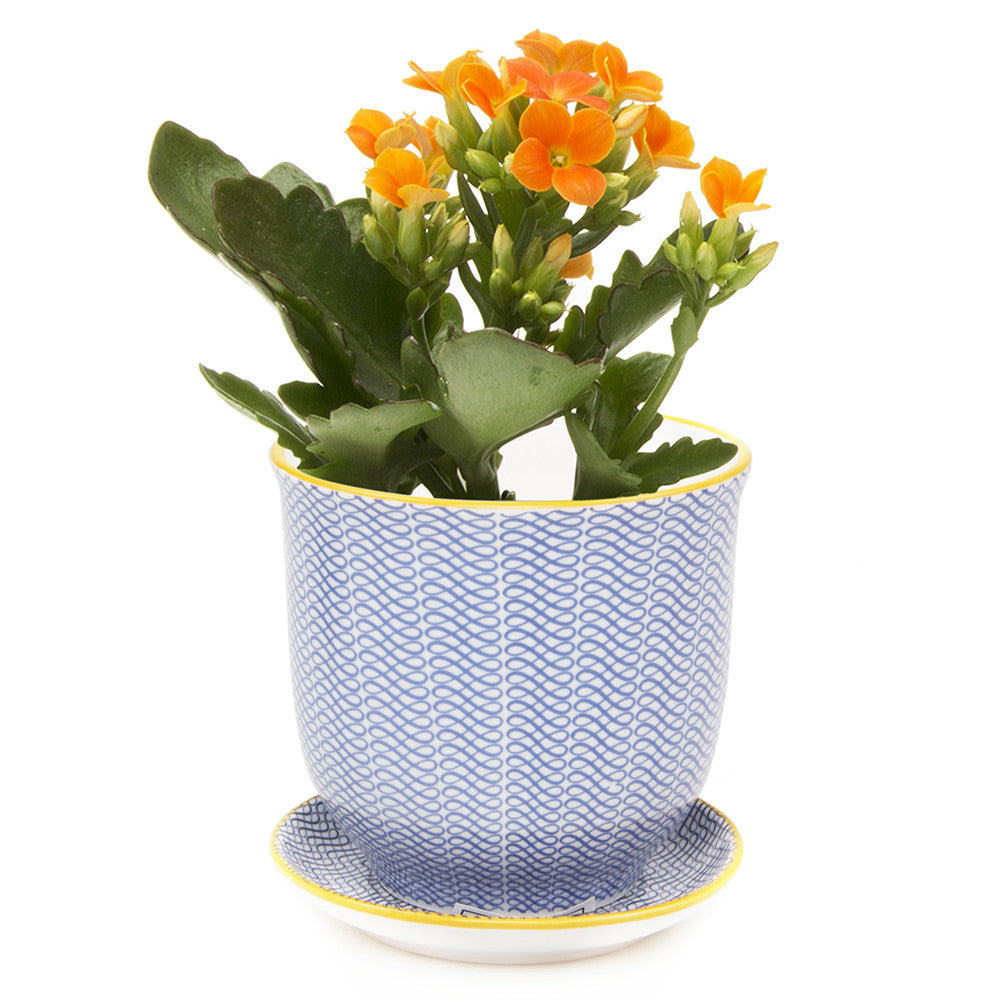 Liberte Pot and Saucer - Blue Ribbon