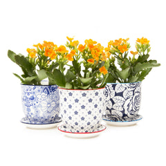 Chive Liberte - Patterned Porcelain Small Pots and Saucers with drainage hole