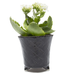 Mead Planter - Black succulent flower pot