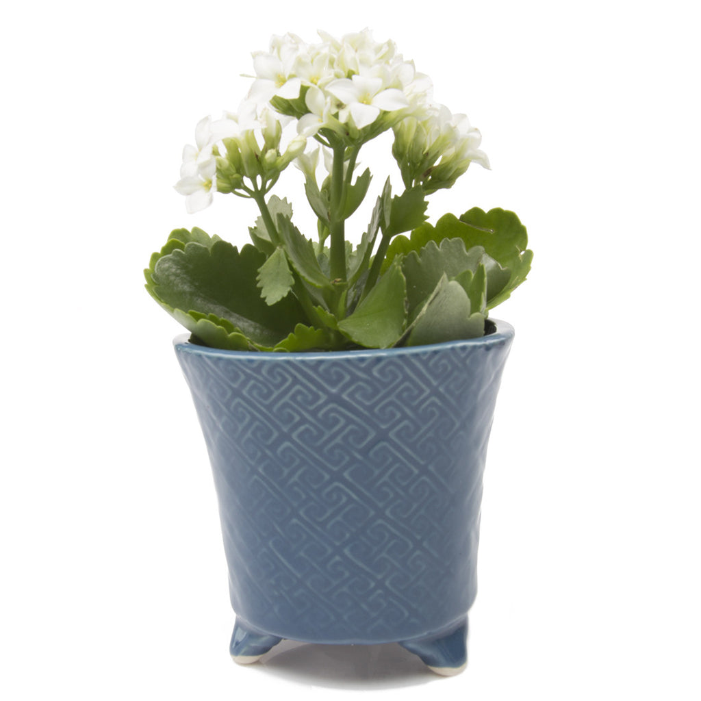 Mead Planter - Blue succulent flower pot