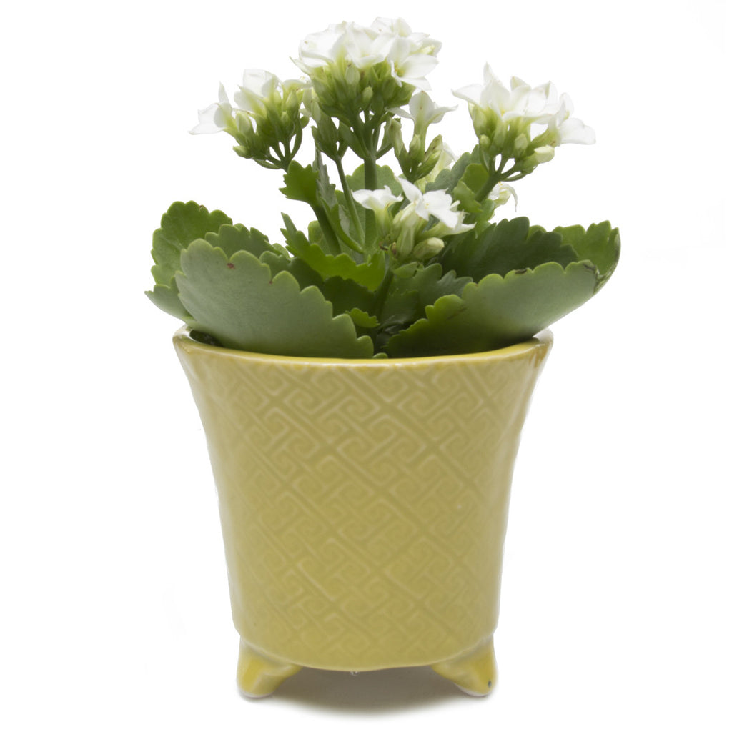 Mead Planter - Goldrod succulent flower pot