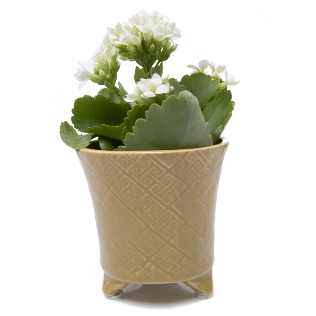Mead Planter - Sand succulent flower pot