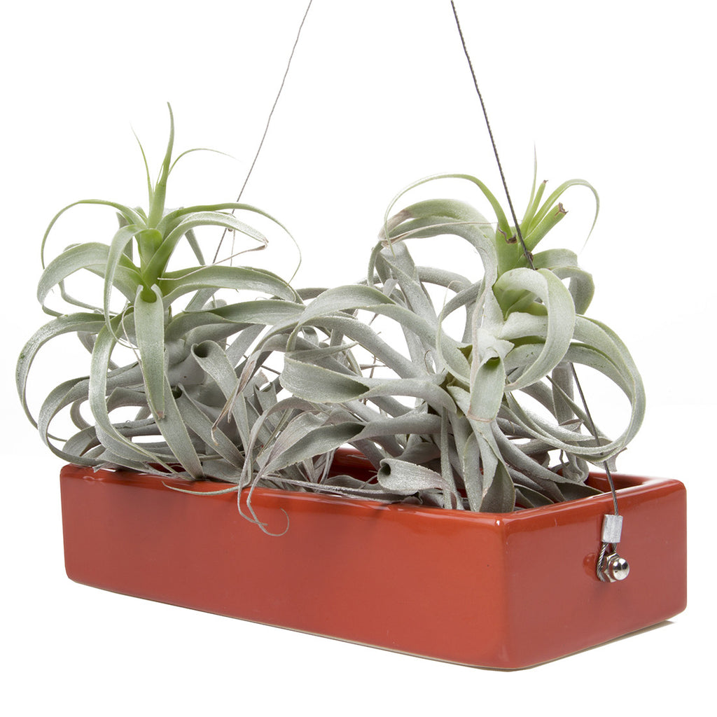 Chive, Ragna - Ceramic Hanging Planter Rust