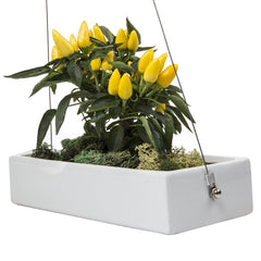 Chive, Ragna - Ceramic Hanging Planter White