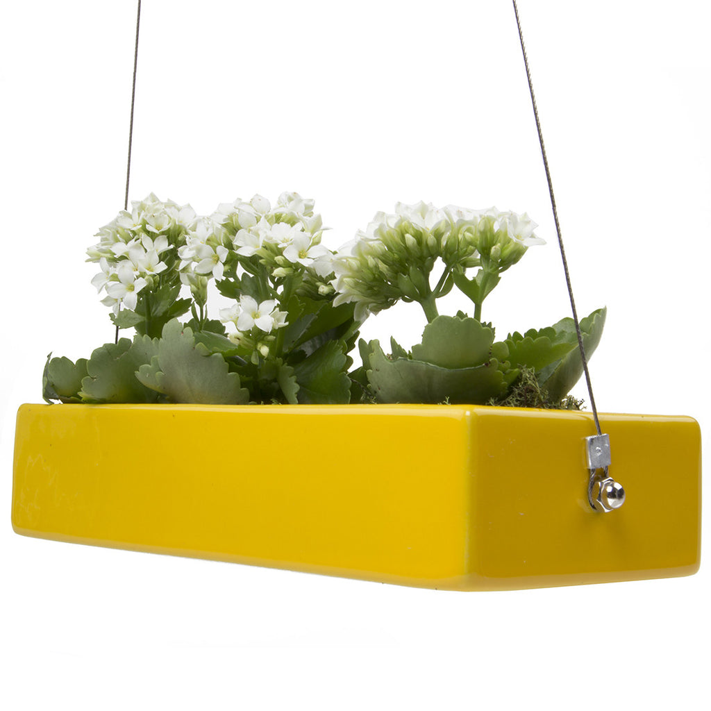Chive, Ragna - Hanging Planter Yellow