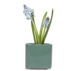 Chive, Svek - Cube Grey Green Ceramic Succulent Pot