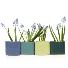 Chive, Svek - Cube  Blue Grey, Grey Green, Pea Green, and Smoke Green Ceramic Succulent Pot
