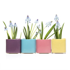Chive, Svek - Cube Dewberry, Sky Blue, Coral and Yellow Ceramic Succulent Pot