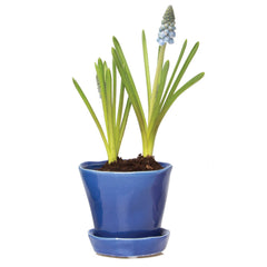 Tika Planter - Cobalt ceramic *planter with saucer*