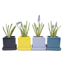 Chive Cube and Saucer - Group of Navy, Yellow, Serenity Blue and Biscay Blue Cube Ceramic Pot and Saucer