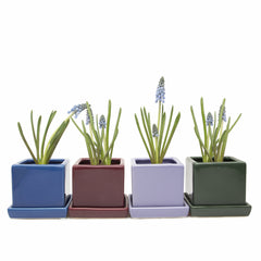 Chive Cube and Saucer - Group of Snokel Blue, Scarlet, Periwinkle and Pine Cube Ceramic Pot and Saucer