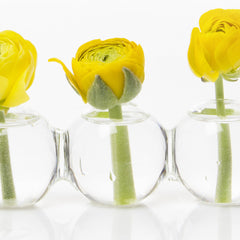 Caterpillar Vase 2 Pack