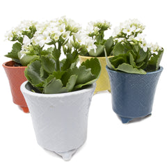 Mead Planter - Mix succulent flower pot