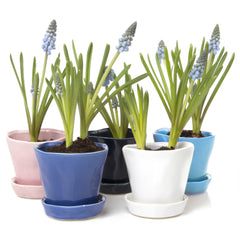Chive Tika Planter - Mix of six ceramic succulent containers