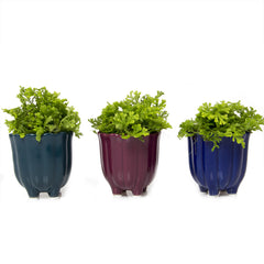 Chive, Tulip Cup - Green Blue, Anemone Pink and Cobalt Ceramic Succulent Pot