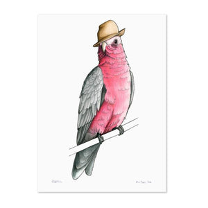 Birds In Hats Print - Galah in a Trilby A4 from have you met charlie a gift shop with Australian unique handmade gifts in Adelaide South Australia