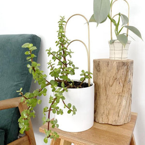 kirralee and co handmade brass plant trellis plant holder made from wood from have you met charlie a unique gift shop in adelaide south australia with handmade products
