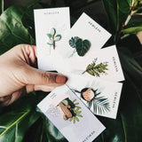 enamel pins by Hemleva in a range of plants and flowers from have you met charlie a gift shop in adelaide selling unique handmade gifts