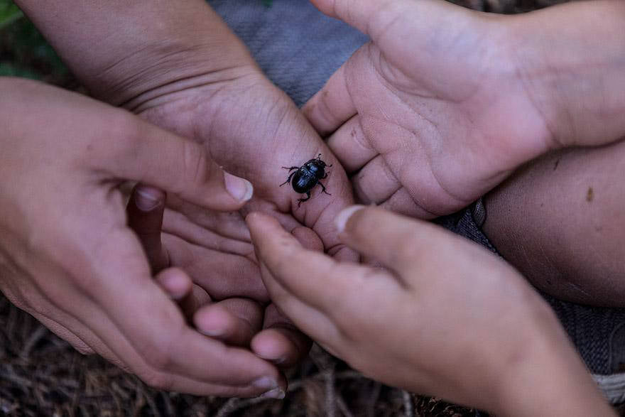 hands supporting a beetle