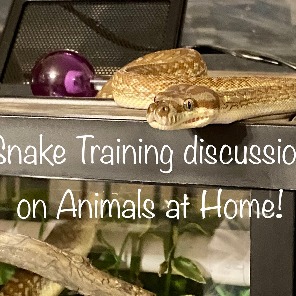 How to Train Your Snake | Lori Torrini, CPDT-KA, A.A.S. - The Animals at Home Podcast