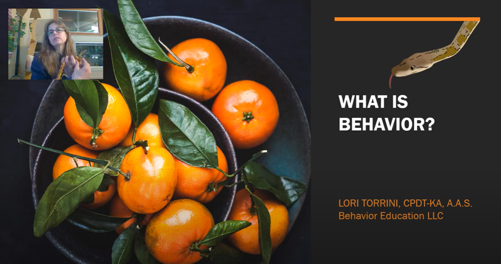 What Behavior Is & Why it Matters!