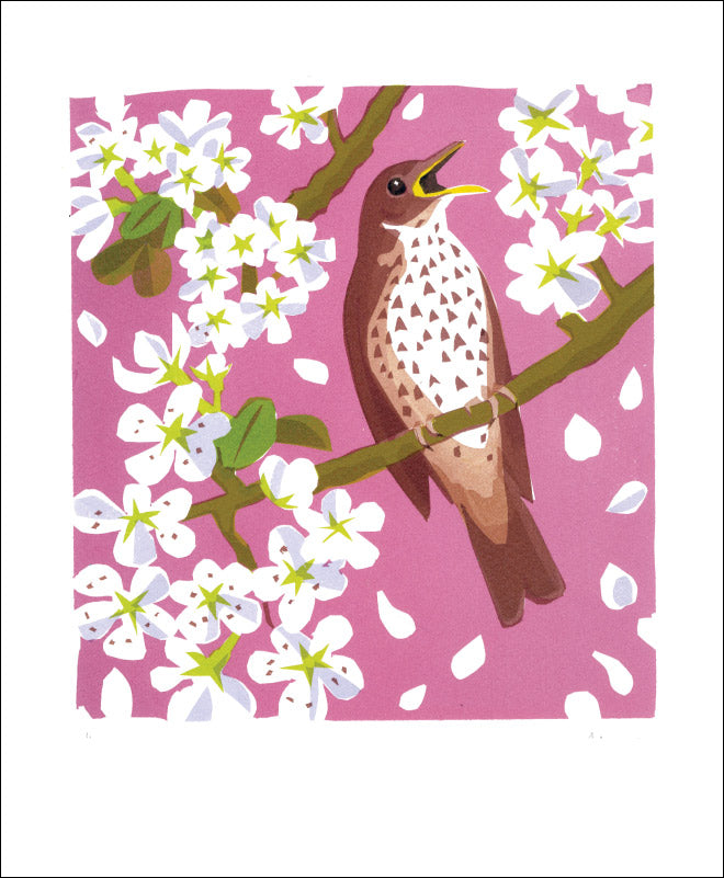 Greetings Card - Song Thrush : Carry Akroyd