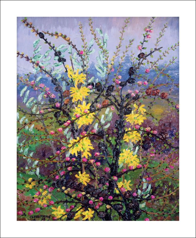 Greetings Card - Shrubs : Cedric Morris