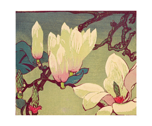 Greetings Card - Magnolia : Mabel Royds