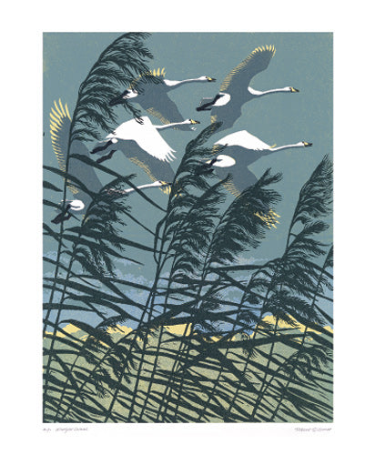 Greetings Card - Whooper Swans : Robert Gillmor